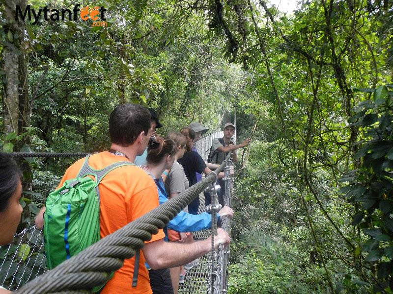 arenal volcano combo tour - hanging bridges