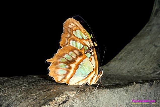Selvatura Park in Monteverde butterfly garden