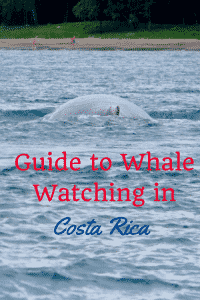 whales in costa rica: guide to seeing whales in Costa Rica