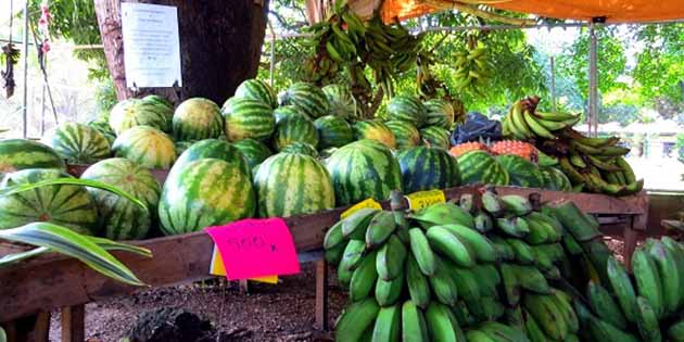 fruit and vegetable stands in playas del coco
