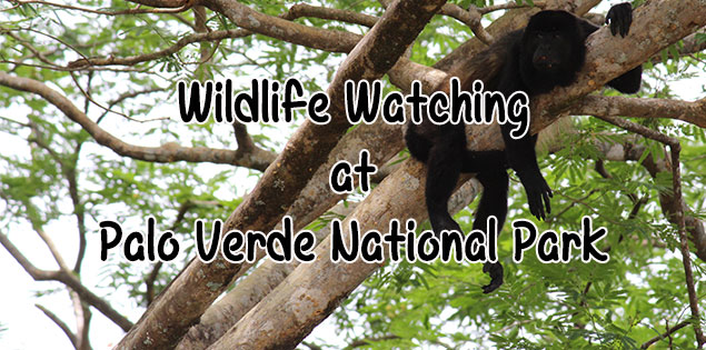 wildlife watching on a river boat ride at Palo Verde National Park - this national park in Guanacaste is important for many species of birds and you can see monkeys, birds, caimans and other wildlife cruising down the river