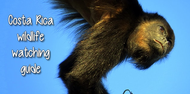 guide to Costa Rica wildlife - when and where to see monkeys, sloths, toucans and more
