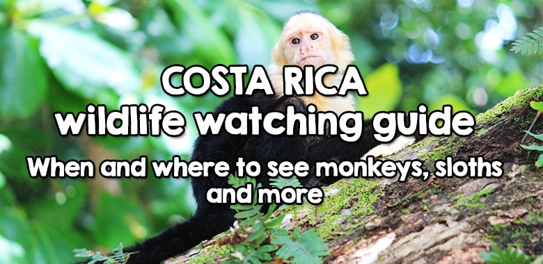 costa rica wildlife watching guide - when and where to see monkeys, sloths, toucans and other animals