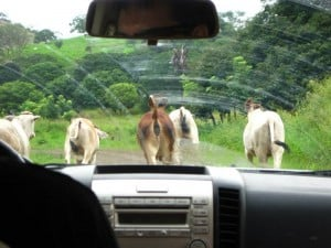 Renting a car in Costa Rica - driving in the Nicoya Peninsula