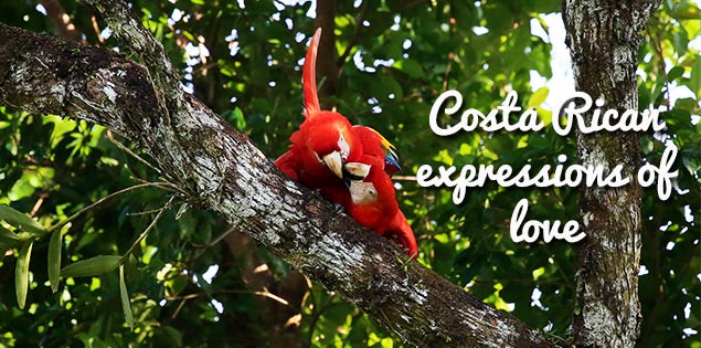 costa rican expressions of love