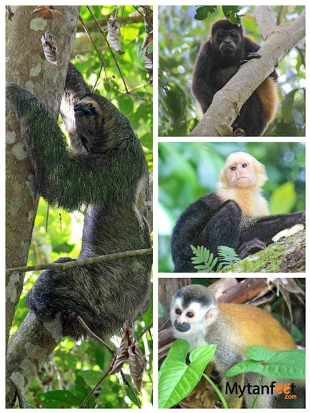manuel antonio national park wildlife. Animals seen in Manuel Antonio Costa Rica