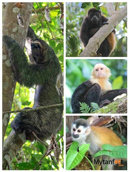 manuel antonio national park wildlife. Animals seen in Manuel Antonio Costa Rica