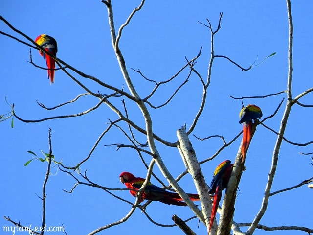 visiting playa jaco birds