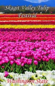 skagit valley tulip festival in washington 1
