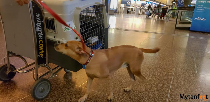bringing dog to Costa Rica from USA - sea tac airport