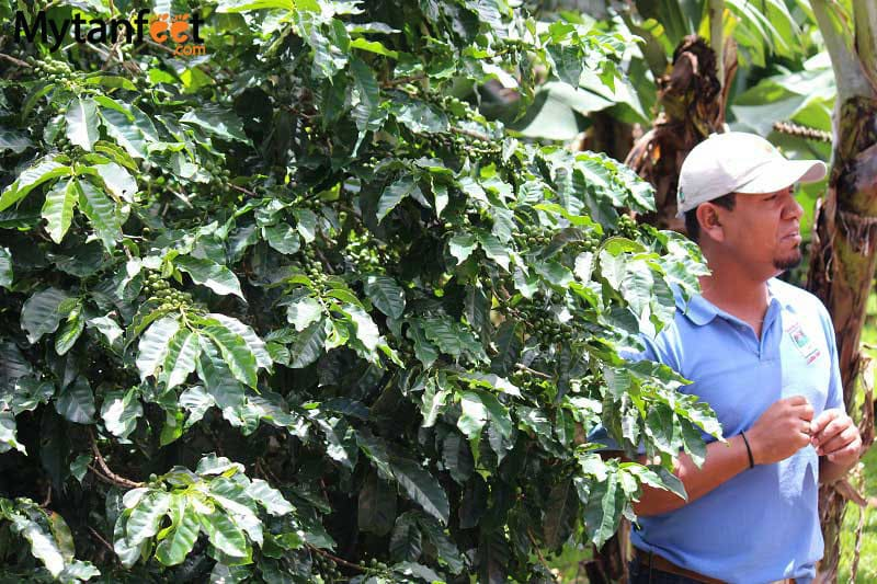 things to do in costa rica - coffee tour