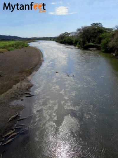 Rio tarcoles crocodiles
