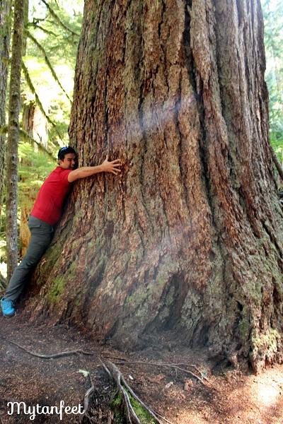 Mount Rainier National Park - grove of the patriarchs