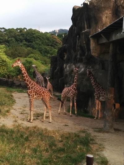 Maokong Gondola and Taipei Zoo