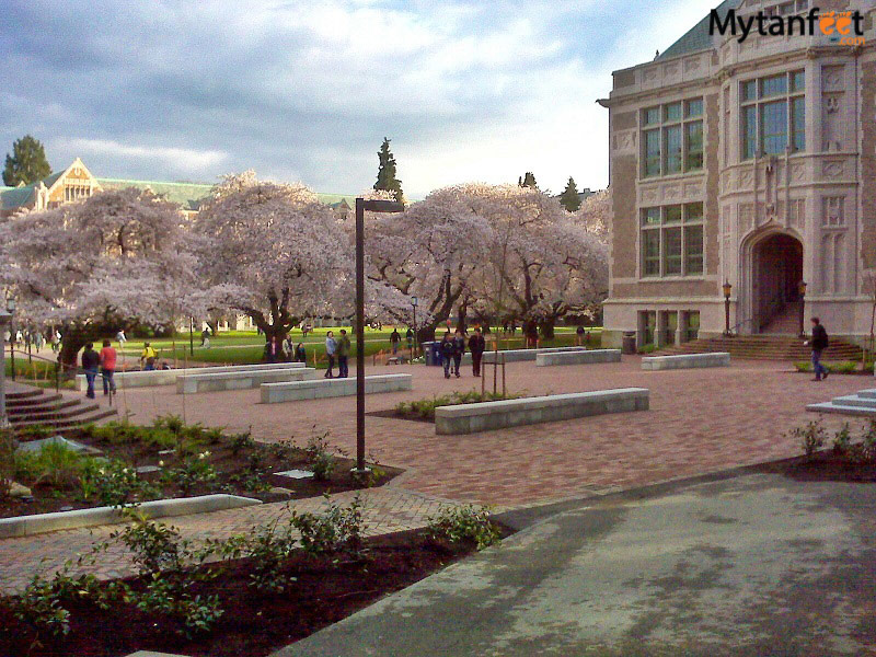 Things to do in Seattle - see the Cherry blossoms at UW
