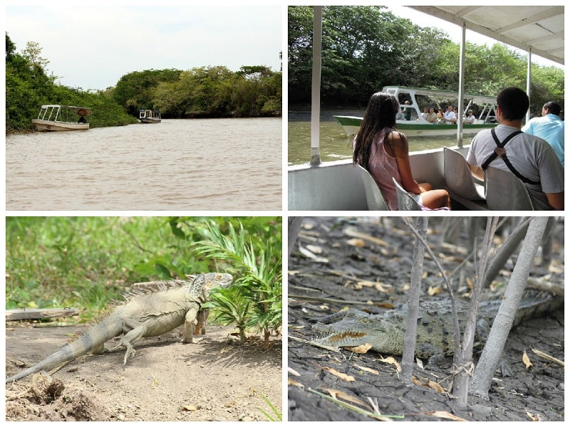 best day trips from playas del coco palo verde national park