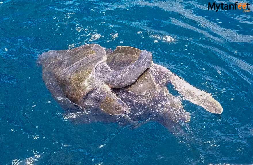 Costa RIca weather - turtles in rainy season