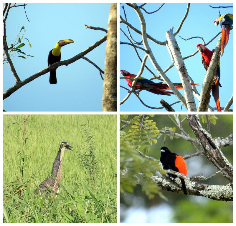 reasons to visit jaco birds