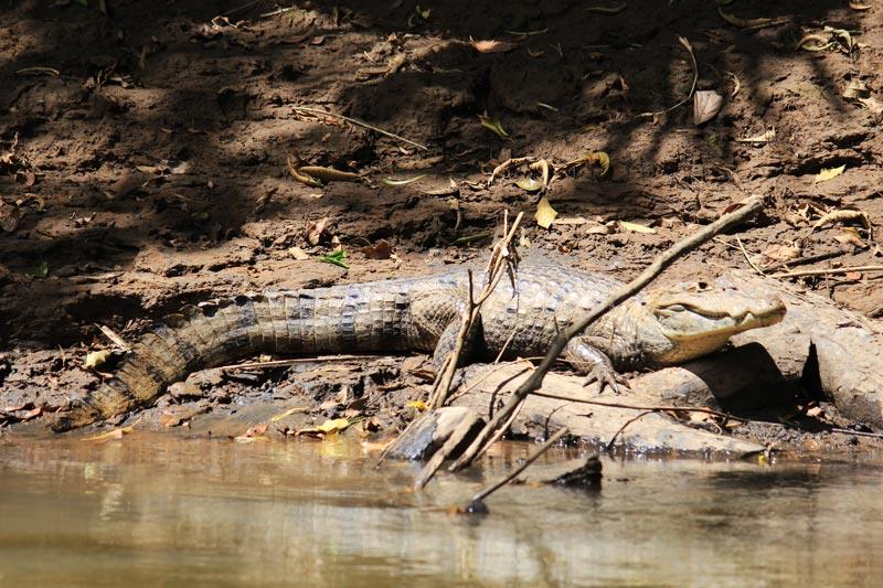 Rio Frio Safari Float - caiman