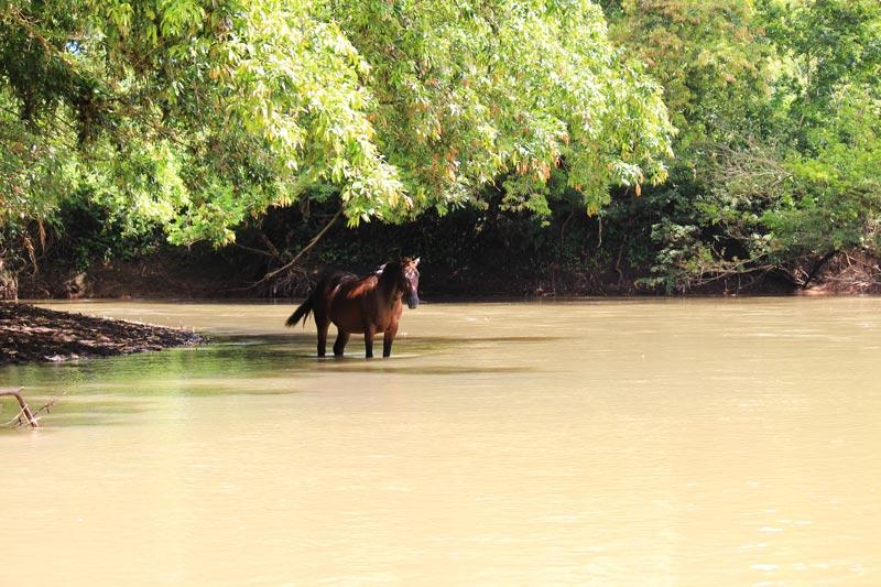 Rio Frio Safari Float - horse