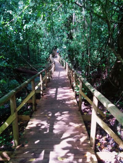The complete guide to hiking Manuel Antonio National Park - sloth trail