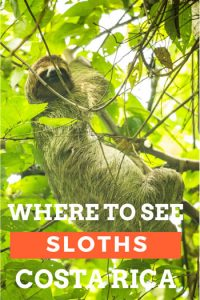 Find out where to see sloths in Costa Rica: the best places and how to guarantee a sloth sighting