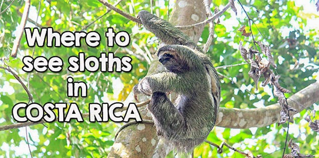 where to see sloths in costa rica - tips for the best places to see sloths