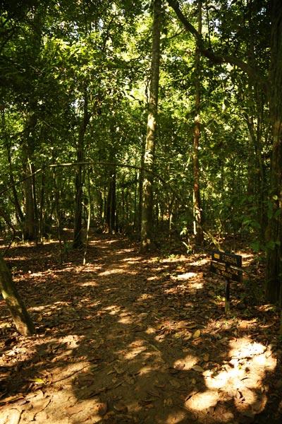 San Pedrillo and Sirena Station in Corcovado National Park - Trails Sirena