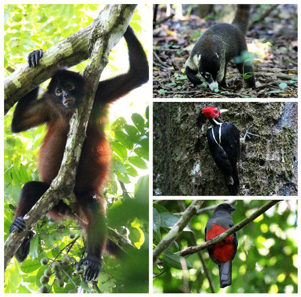 San Pedrillo and Sirena Station in Corcovado National Park - sirena wildlife