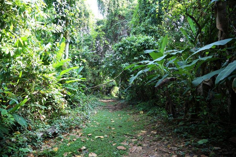 casa corcovado jungle lodge - san pedrillo trail