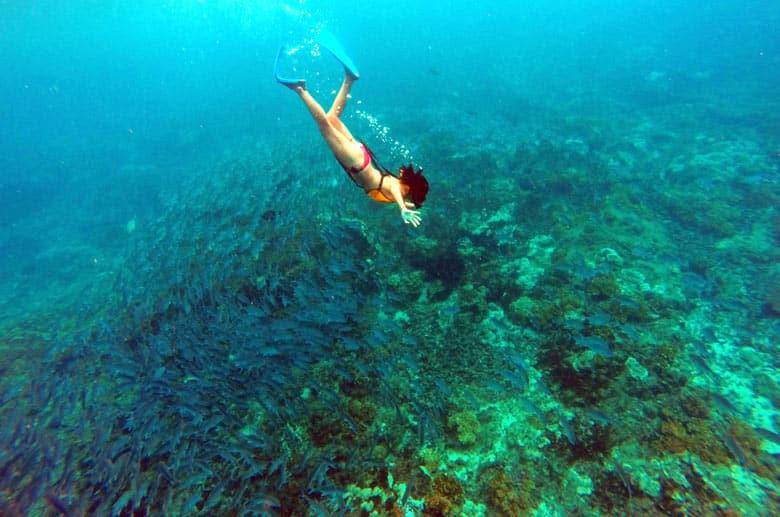 snorkeling at cano island - swimming with school of bigeye jacks