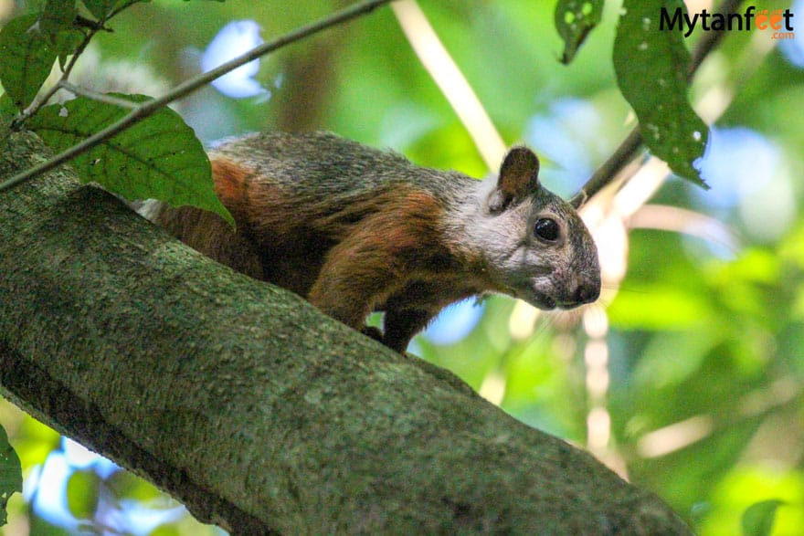 Carara National Park Animals - squirrel