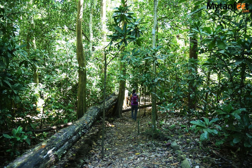 Carara National Park trail