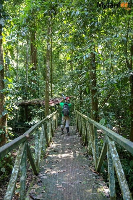 Carara National Park trails