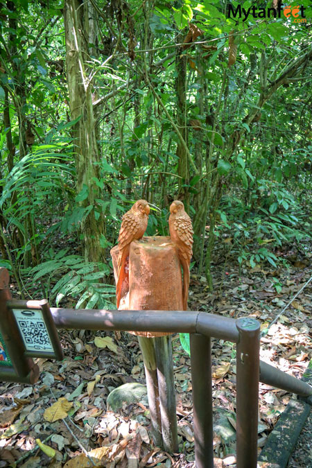 Carara National park - universal trail