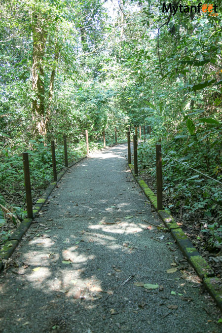 Carara National park universal trail