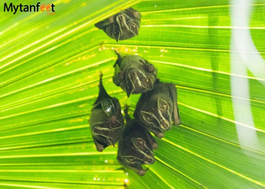costa rica wildlife bats