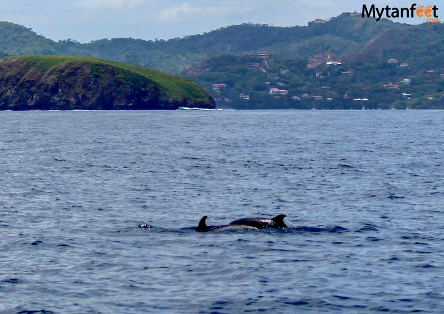 Costa Rica wildlife - dolphins