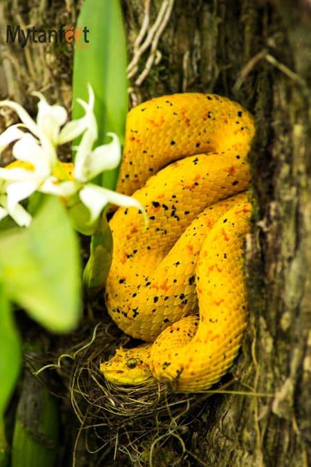 Costa Rica wildlife - snake
