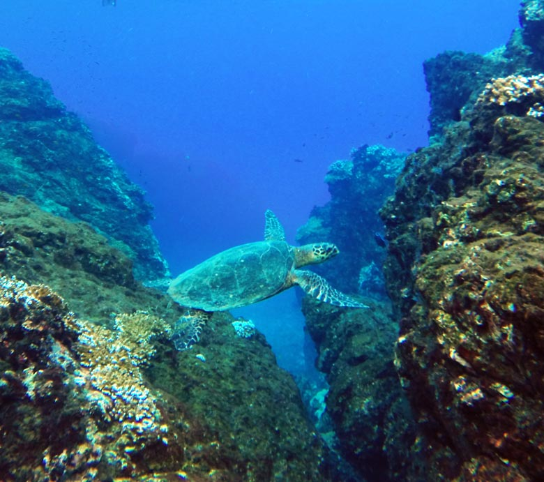 reptiles in costa rica - sea turtle