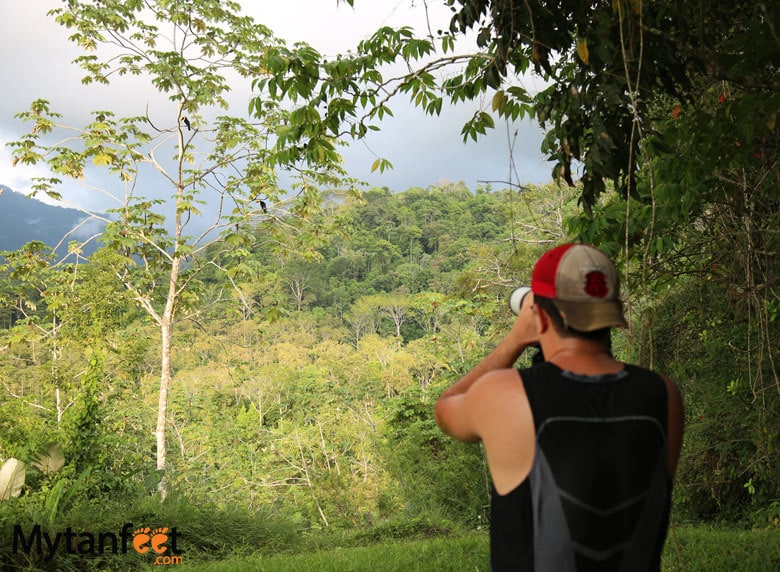 things to do in uvita and dominical - bird watching
