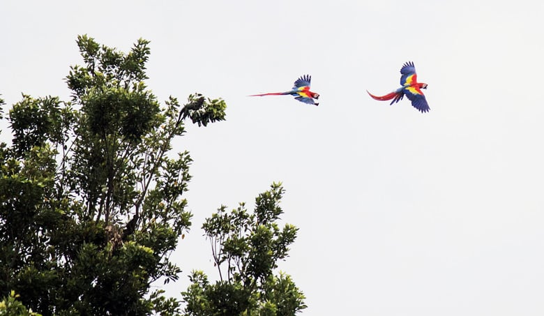 what its like to live in jaco - Scarlet Macaws. FInd out what living in Jaco is like