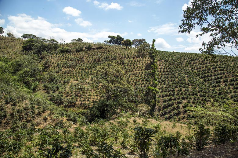 10 reasons to visit the central valley in Costa Rica - coffee plantations and coffee tours