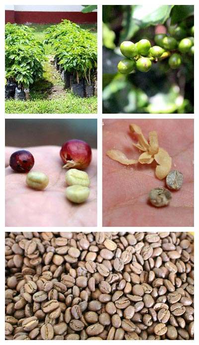 10 reasons to visit the central valley in Costa Rica - doka coffee tour