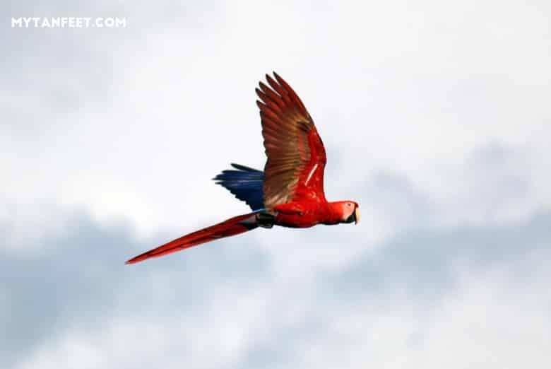 things to do in Playa Jaco - bird watching