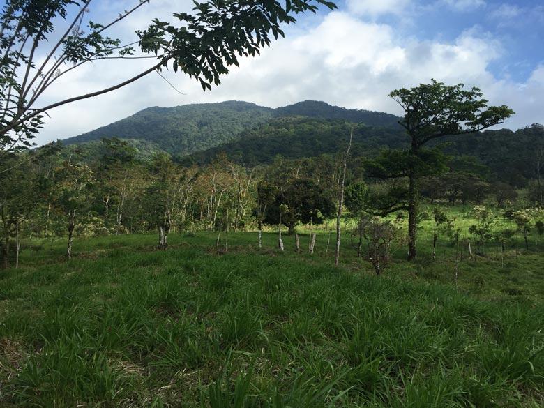 View from the mirador at Casitas Tenorio