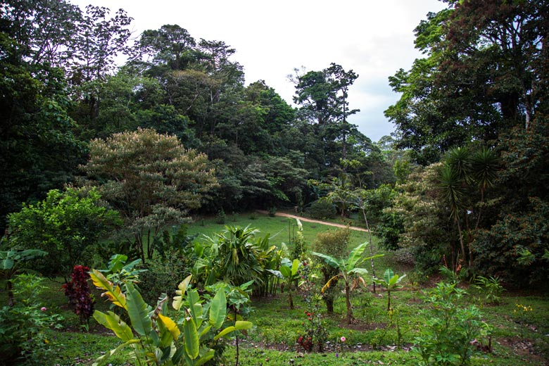 View of the gardens and forest from volcan Casita of Casitas Tenorio