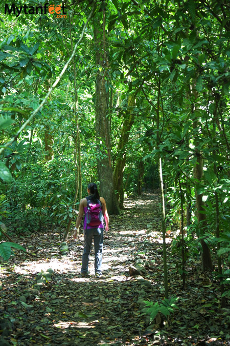 Costa Rica experiences - forest