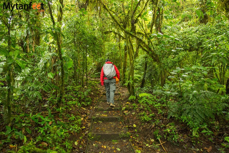 packing for rainy season in costa rica - cloud forests