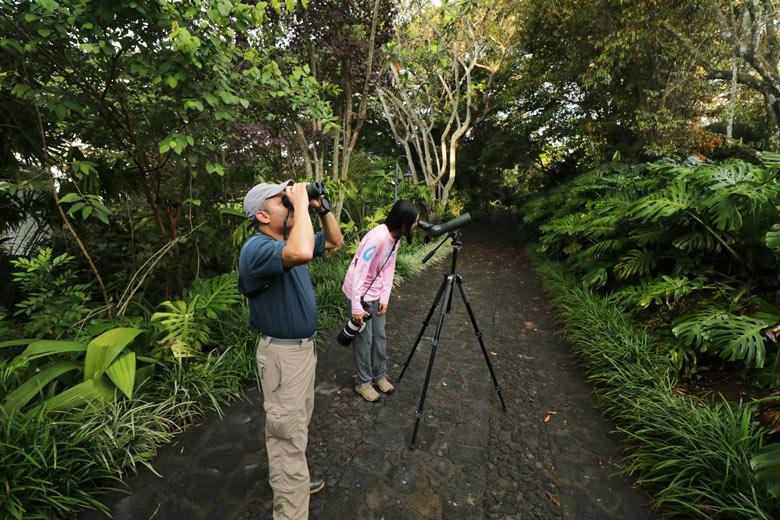 Finca Rosa Blanca - Hummingbird birdwatching